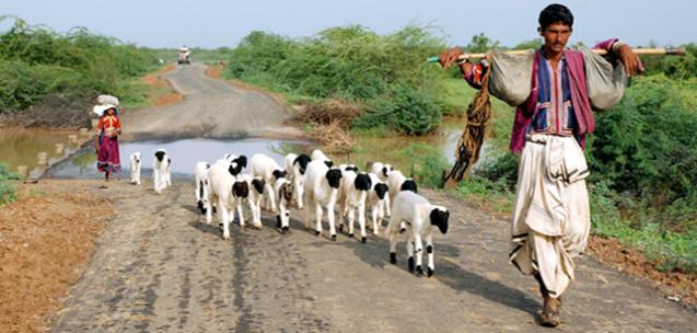 Maldharis Tribe in Gir Jungle Maldhari Community and Cloths in Gir National Park  Gujarat