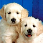 Dog Lovers Club & Om Veterinary Presents Dog Show cum Fashion Show at Galaxy Farmhouse in Rajkot