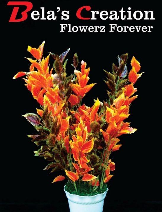Belas Creation Flowerz Forever in Ahmedabad