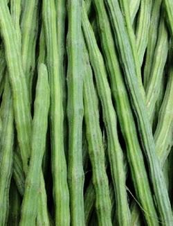 Moringa Oleifera in Gujarati (English Meaning - Drumstick Leaves) - Farm in Gujarat