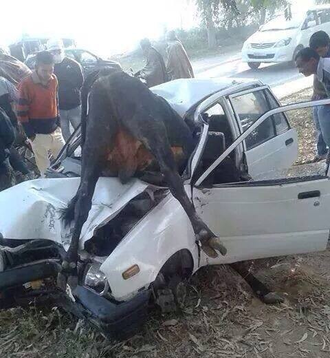Very Hard Accident between CAR Maruti 800 and Animal Cow on RoadHighway
