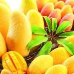 Mango Festival 2015 Dates in Sasan Gir Gujarat